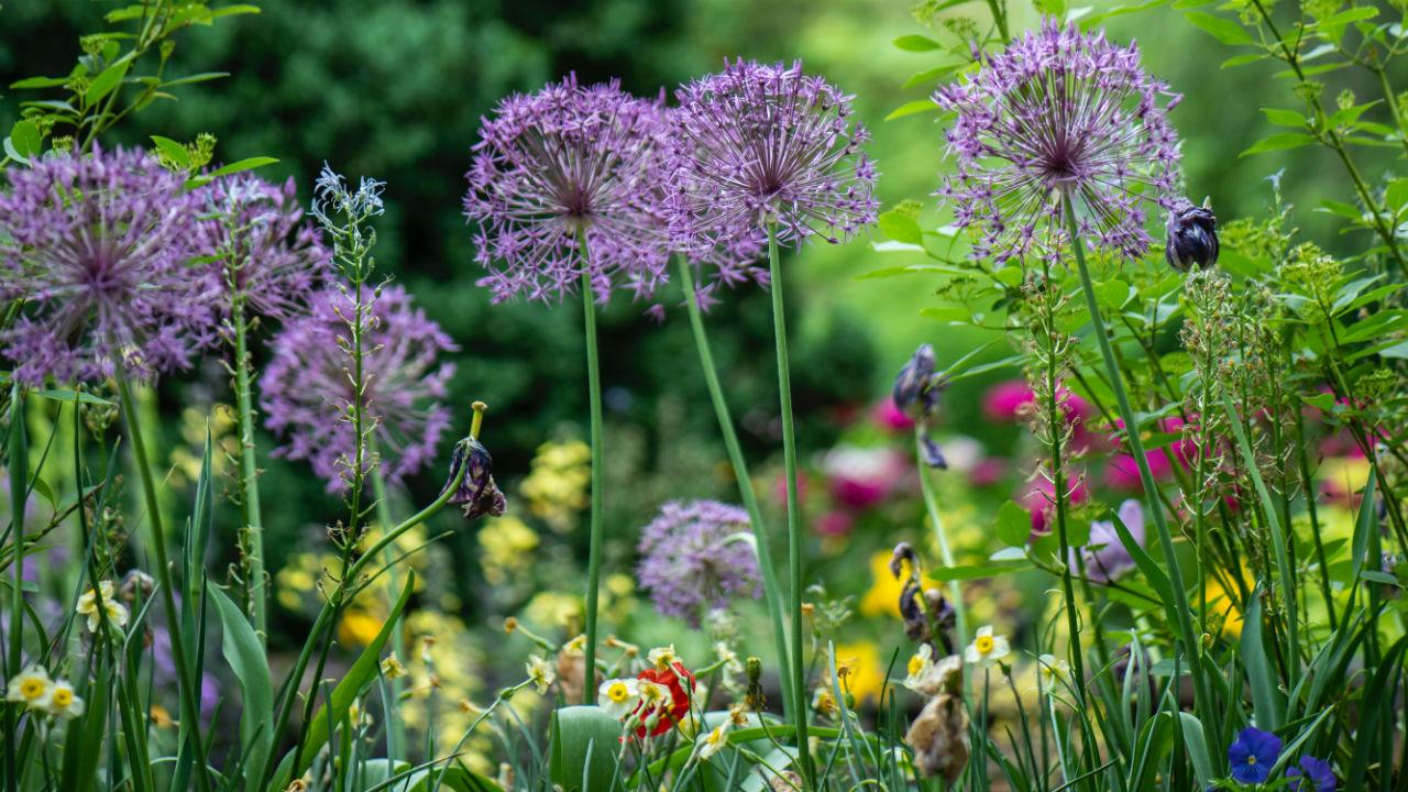 Jouw tuin als paradijs