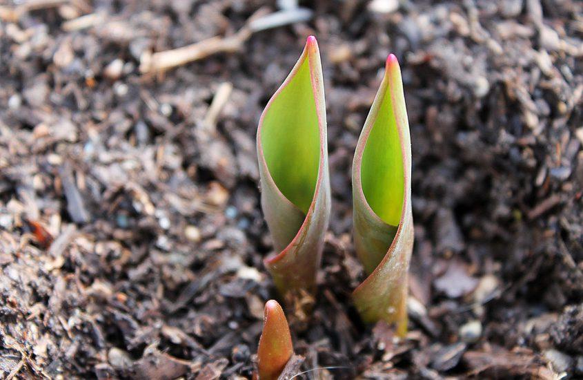 Houd de grond van jouw tuin gezond