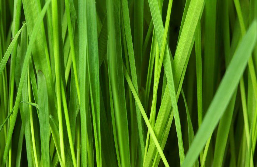 Graszaad kopen voor jouw tuin