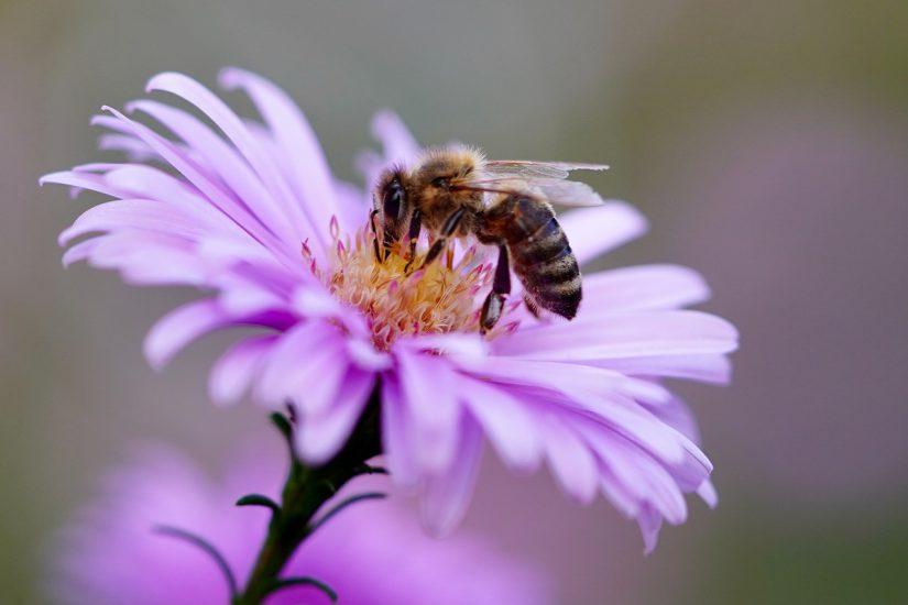 Wat te doen met een wespennest in de tuin?