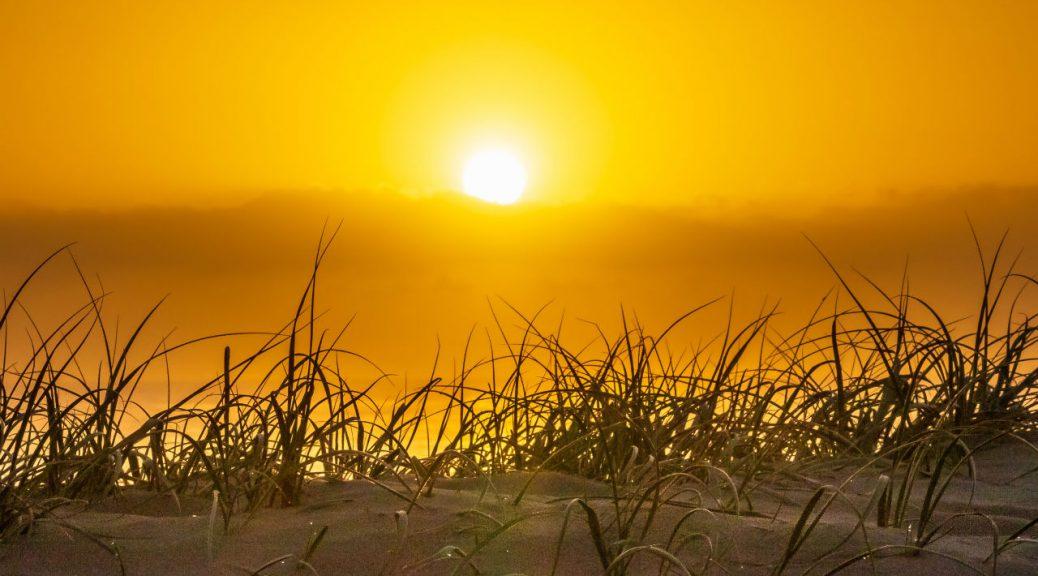 zon zee